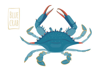 Blauwe krab, vector cartoon illustratie