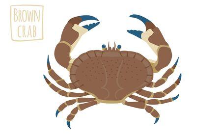 robust: Brown crab, vector cartoon illustration