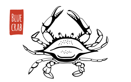 Blue Crab, vector illustration, cartoon style