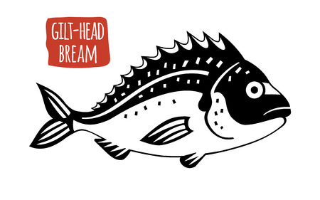 gilthead bream: Gilt-head bream, vector illustration, cartoon style