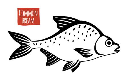 abramis: Common Bream, vector illustration, cartoon style Illustration