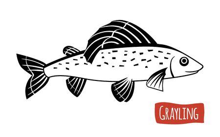grayling: Grayling, vector illustration, cartoon style