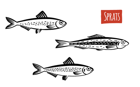 sardines: Sprats, vector illustration, cartoon style