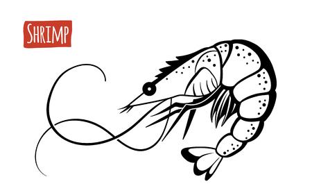 susi: Shrimp, vector illustration, cartoon style