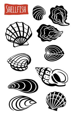 molluscs: Shellfish, vector illustration, cartoon style