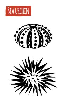 sea urchin: Sea Urchin, vector illustration, cartoon style Illustration