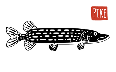 pike: Pike, vector illustration, cartoon style
