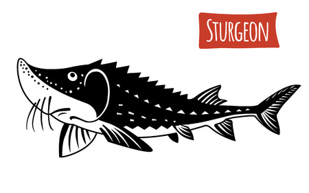 sturgeon: Sturgeon, vector illustration, cartoon style Illustration