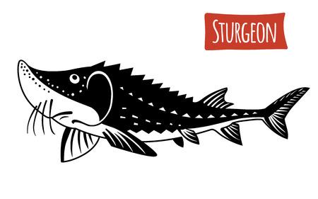 susi: Sturgeon, vector illustration, cartoon style Illustration