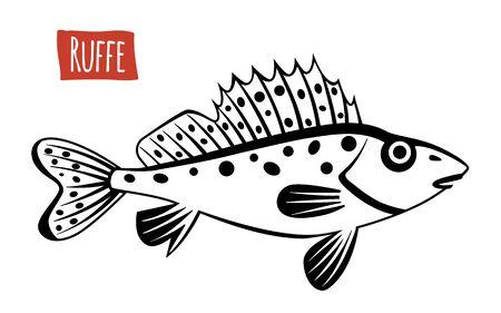 Ruffe, vector illustration, cartoon style Illustration