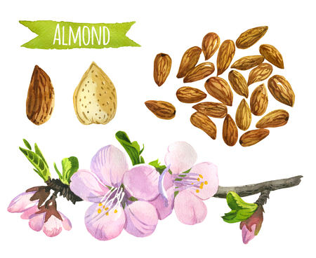 Almond, hand-painted watercolor set, vector clipping paths included