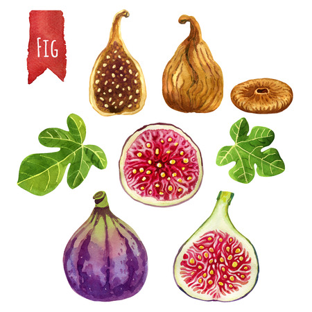 Figs, hand-painted watercolor set, vector clipping paths included 写真素材