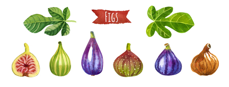 Figs, hand-painted watercolor set, vector clipping paths included Reklamní fotografie