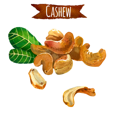 paths: Cashew, hand-painted watercolor set, vector clipping paths included