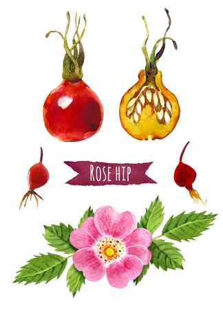 paths: Rose hip, hand-painted watercolor set, clipping paths included