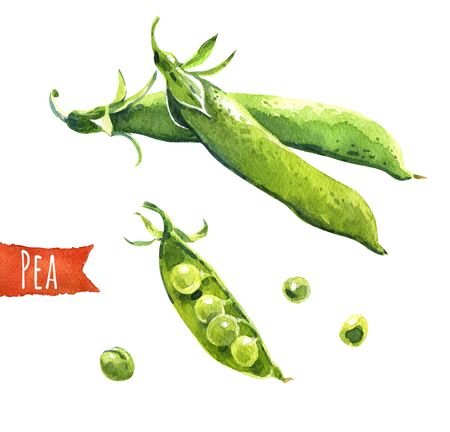 paths: Peas, hand-painted watercolor illustration, clipping paths included