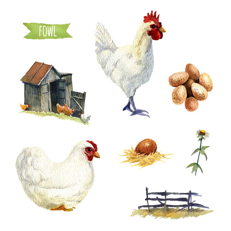 fense: Chicken, hand-painted watercolor set, clipping paths included