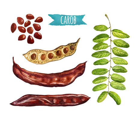 legume: Carob, hand-painted watercolor set, clipping paths included