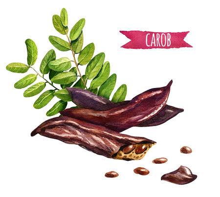 Carob, hand-painted watercolor set, clipping paths included