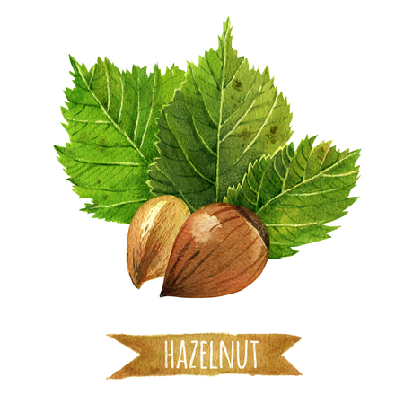 hazelnut: Hazelnut, hand-painted watercolor set, clipping paths included Stock Photo