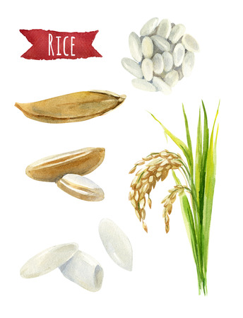 Rice hand-painted watercolor illustration set Stok Fotoğraf - 68713805