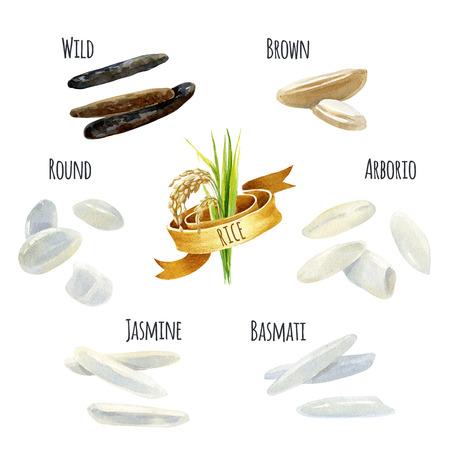 米の種類の手描き水彩イラスト セット