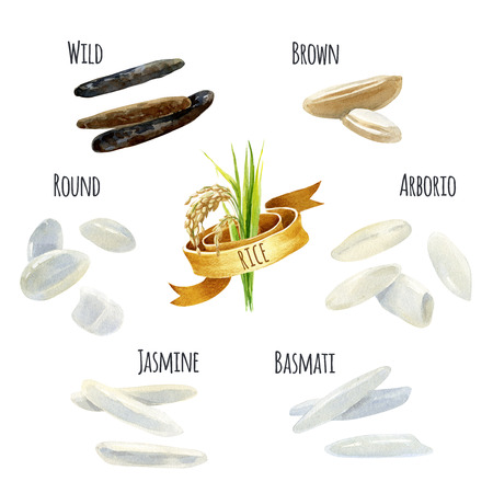 Rice types hand-painted watercolor illustration set Stok Fotoğraf