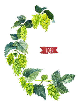 Hops isolated on white, hand-painted watercolour illustration Stock Photo