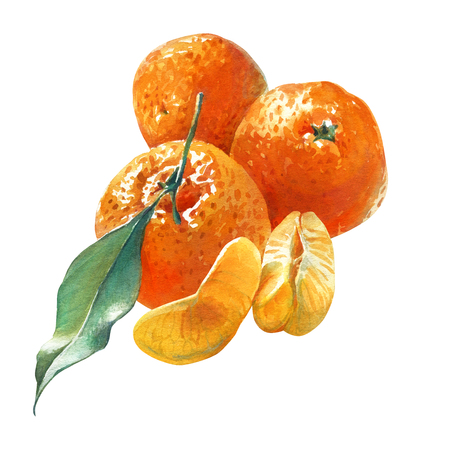 mandarins: Watercolor illustration of three mandarins with green leaf isolated on white background with clipping path included