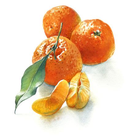 Waterverfillustratie van drie mandarins met groen blad en stukken op witte achtergrond Stockfoto
