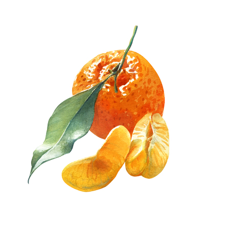 mandarins: Watercolor illustration of a mandarin orange with green leaf and pieces isolated on white background with clipping path included Stock Photo
