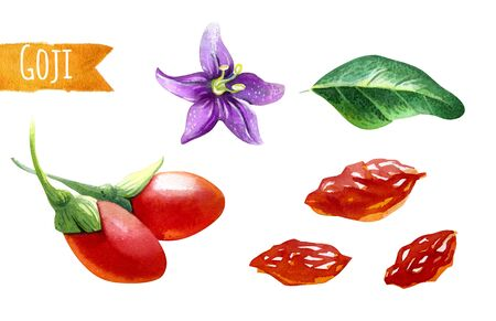 Watercolor illustration of goji berries isolated on white background