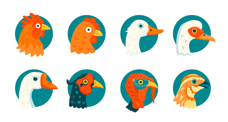 Set of icons, farm domestic birds vector illustrations Imagens
