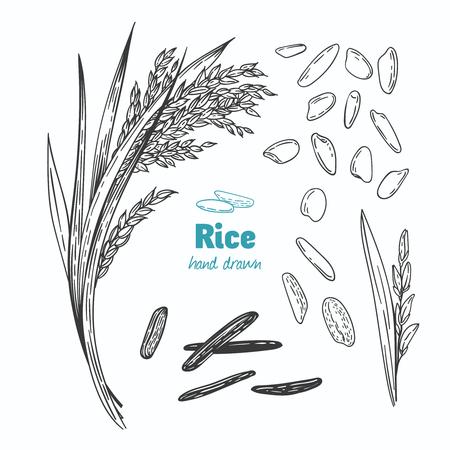 Vecteur détaillée noir détaillée et illustration de marbre de graines de riz et de paille Banque d'images - 88355536
