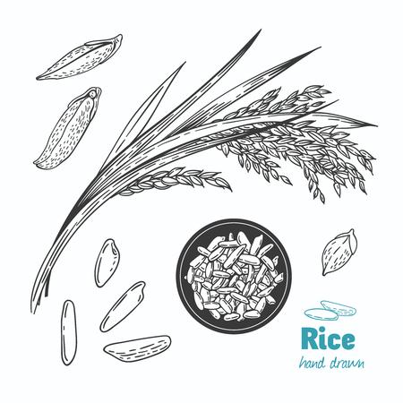 Illustration détaillée de vecteur noir et blanc dessinés à la main des graines de riz et de la paille Banque d'images - 88355565