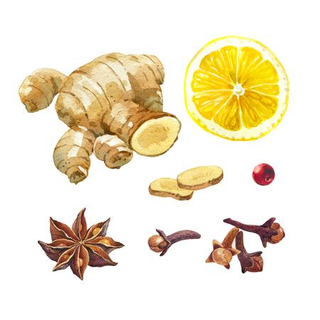 レモンやショウガの根、badiam、スターアニス、クローブが含まれているクリッピング パスを白い背景上に孤立の水彩イラスト