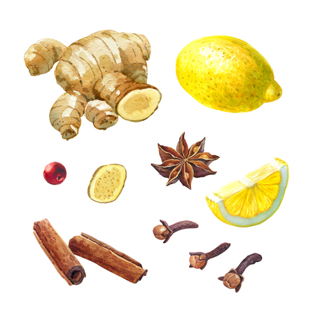 Watercolor illustration of lemon, ginger root, badiam, staranise, cinnamon and cloves isolated on white background with clipping paths included
