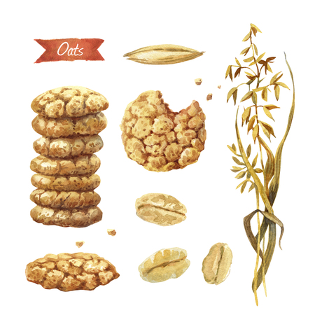 Watercolor illustration of oat plant; seeds; flakes and cookies isolated on white background with clipping paths included
