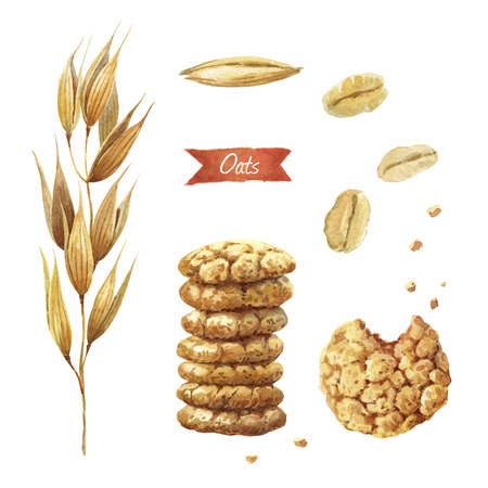 Waterverfillustratie van haverinstallatie; zaden; vlokken en koekjes geïsoleerd op een witte achtergrond met uitknippaden inbegrepen