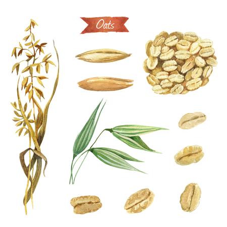 Waterverfillustratie van haverinstallatie; zaden en vlokken geïsoleerd op een witte achtergrond met uitknippaden inbegrepen Stockfoto