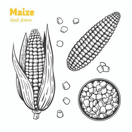 Ausführliche Hand gezeichnete Vektorschwarzweißabbildung der Maiskörner und -ohren mit Blättern.