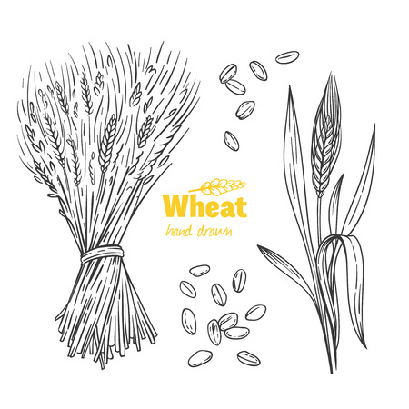 Detailed hand drawn vector black and white illustration of wheat seeds, sheaf, ears and straw