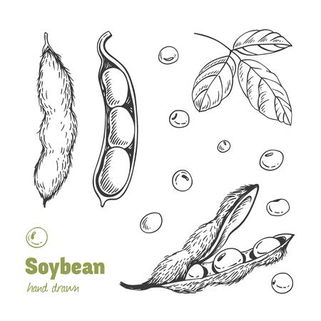 Detaillierte Hand gezeichnete Vektor-Schwarzweiss-Illustration von grünen Sojabohnen, Hülsen und Blättern
