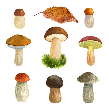 Hand painted watercolor illustration of assorted edible forest mushrooms isolated on white background Imagens