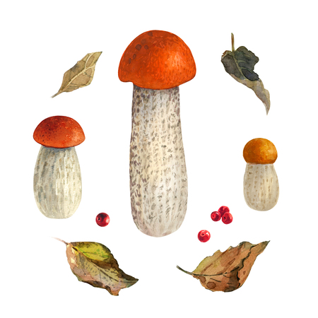 Hand painted watercolor illustration of Red-capped scaber stalk mushrooms with dry leaves isolated on white background Imagens