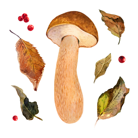 Hand painted watercolor illustration of Bolete mushroom isolated on white background Imagens
