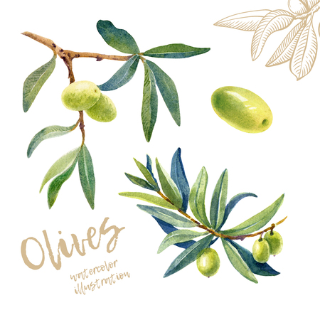 Green olives on branch with leaves painted background. Imagens