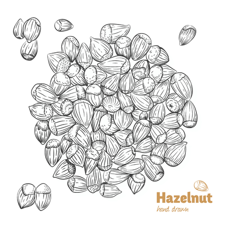 Detailed hand drawn vector black and white illustration of hazelnuts with leaves
