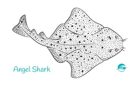 Detailed hand drawn vector black and white illustration of Angel Shark Ilustrace