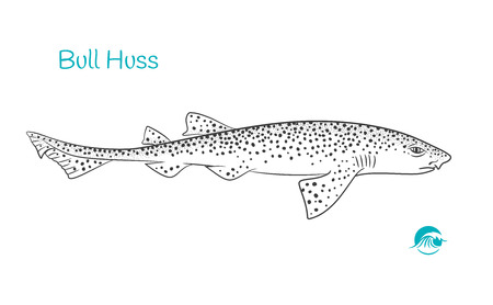 Detailed hand drawn vector black and white illustration of nursehound (bull huss) fish Иллюстрация